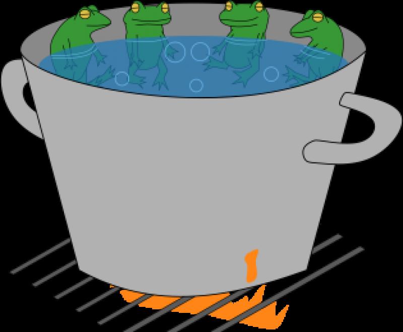 Pot Full of Frogs